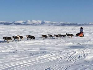 Cindy Abbott Iditarod