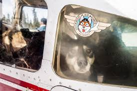 Iditarodairforce
