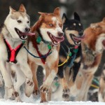 Mushing Radio: Sleep!