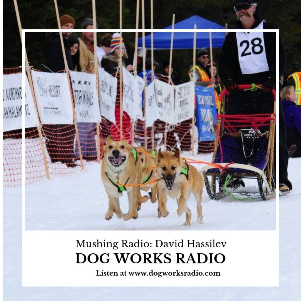 David Hassilev on Mushing Radio