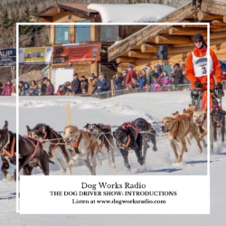 The Dog Driver Dog Works Radio