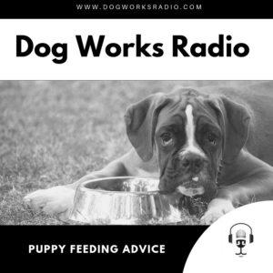 Puppy Feeding Advice Dog Works Radio