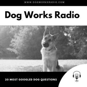 20 Most Googled Dog Questions dog works radio