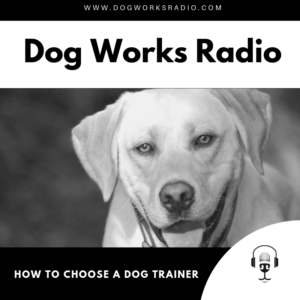 How to Choose a Dog Trainer Dog Works Radio