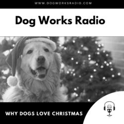 Why dogs love christmas alaska dog works