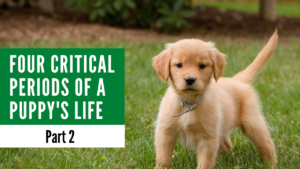 Four Critical Periods of a Puppy's Life Part 2