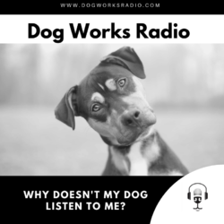 Why doesn't my dog listen to me? Alaska Dog Works