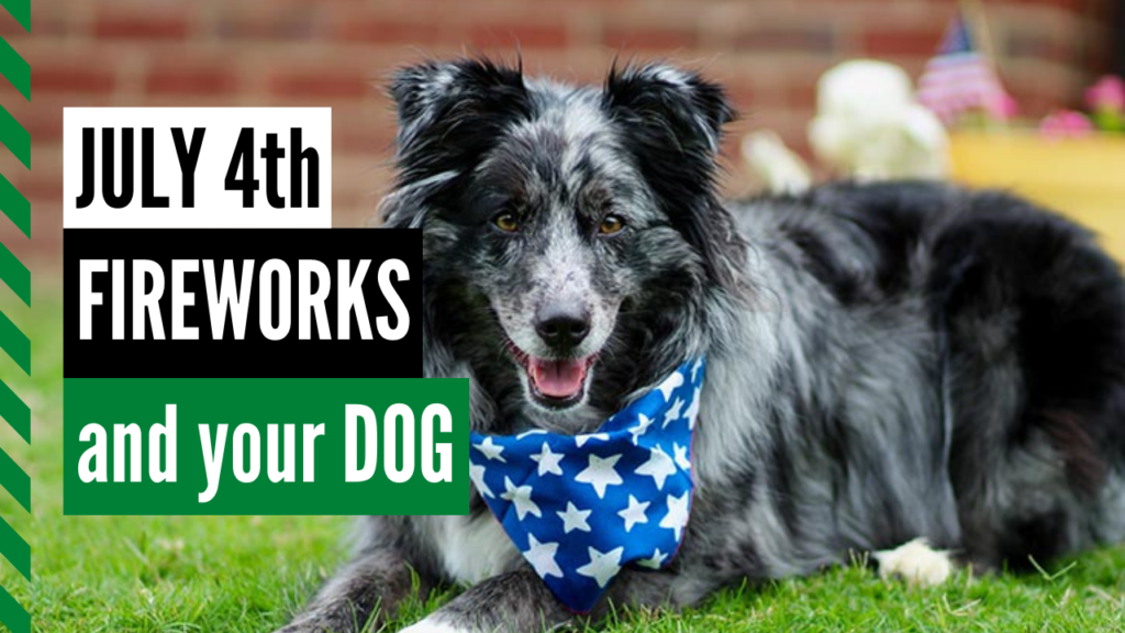How to Keep Your Dog Calm During Fourth of July Fireworks