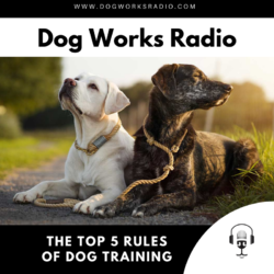 The top 5 rules of dog training