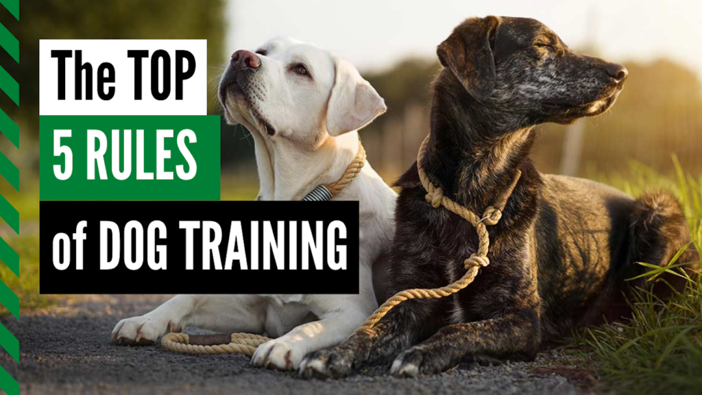 the top five rules of dog training Thumbnail