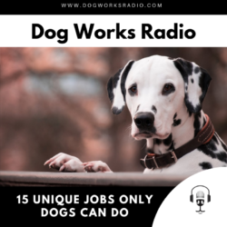 15 Unique Jobs Only Dogs Can Do