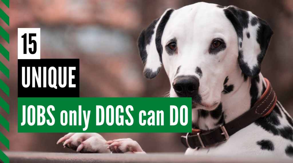 15 Unique Jobs Only Dogs Can Do Thumbnail-3