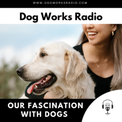 our fascination with dogs dog works radio