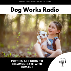 Puppies are born to communicate with humans dog works radio